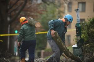 WASHINGTON, DC - MARCH 2: Employees of the Adirondack Tree Expe