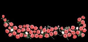 Close-Up Of Red Roses Against Black Background
