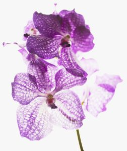 Close up of purple and white orchids